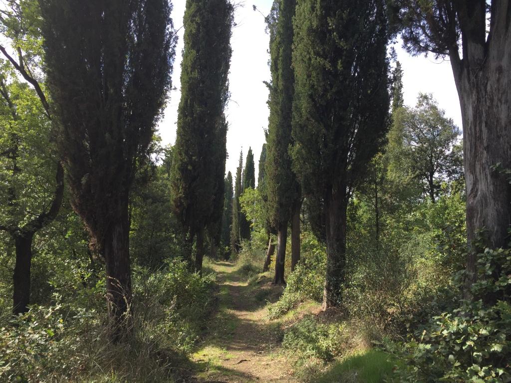 Viale di cipressi in direzione Poggio Mendico...