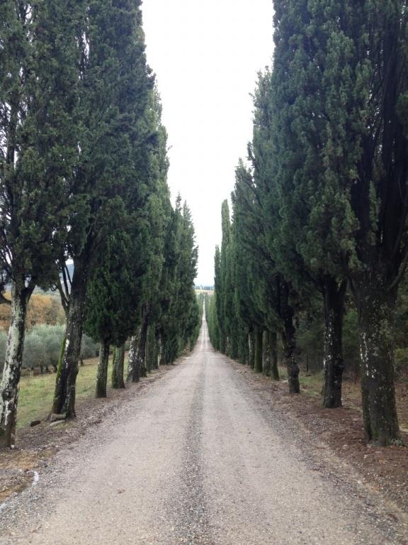 Viale di cipressi - Villa d'Arceno (SI)