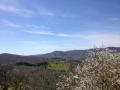La Valdambra si veste di primavera!!